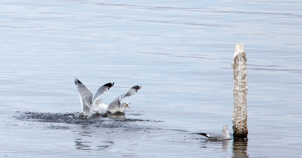Salton Bird-8.jpg