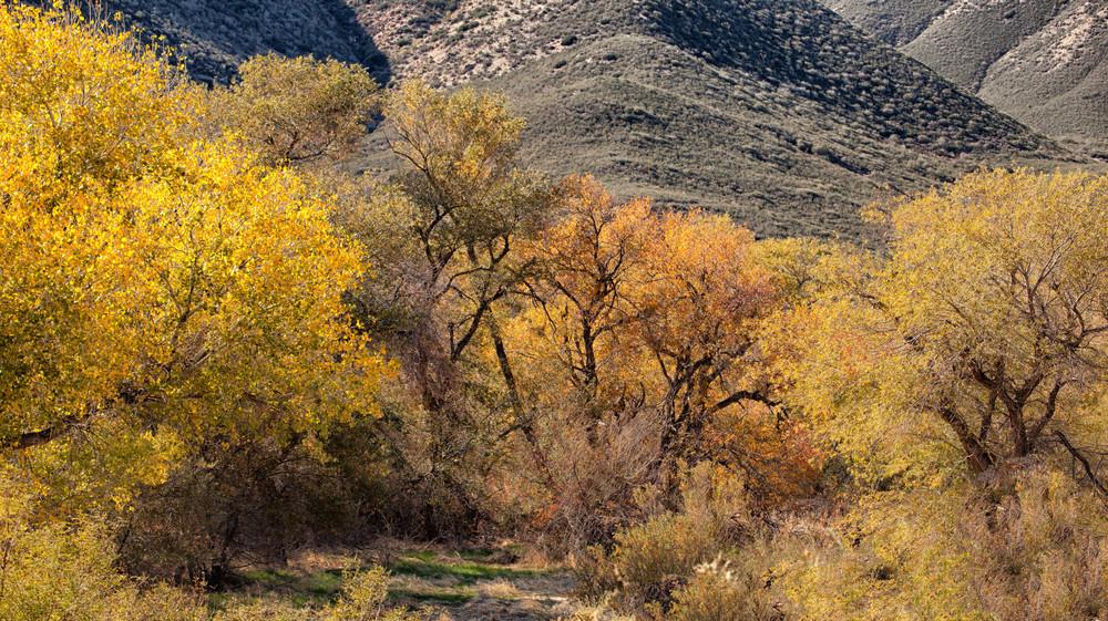 Desert Fall.jpg