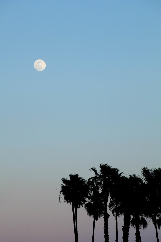 Palm Springs Pastel.jpg