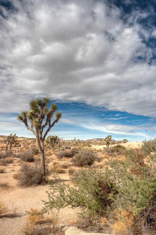 Desert Gate.jpg