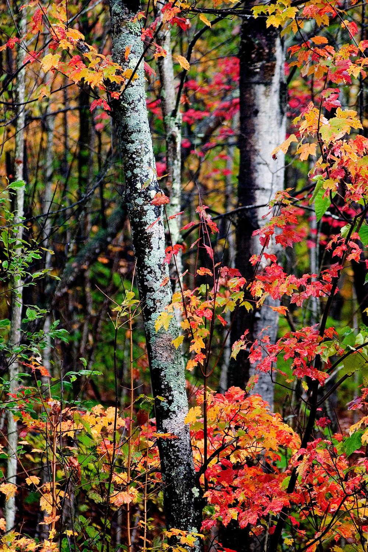 mossy red.jpg