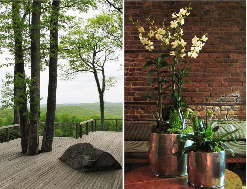orchidsplit.jpg