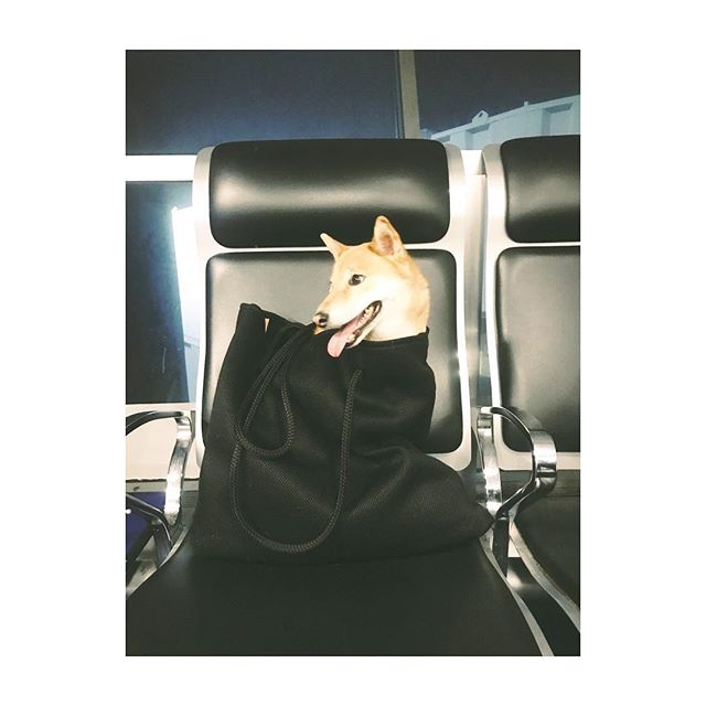 @foxdogkita is on her way to #Warsaw travelling in style 👌🏿 The CLEW Beach Bag doubles as a travel tote for all your furry essentials...link in bio!