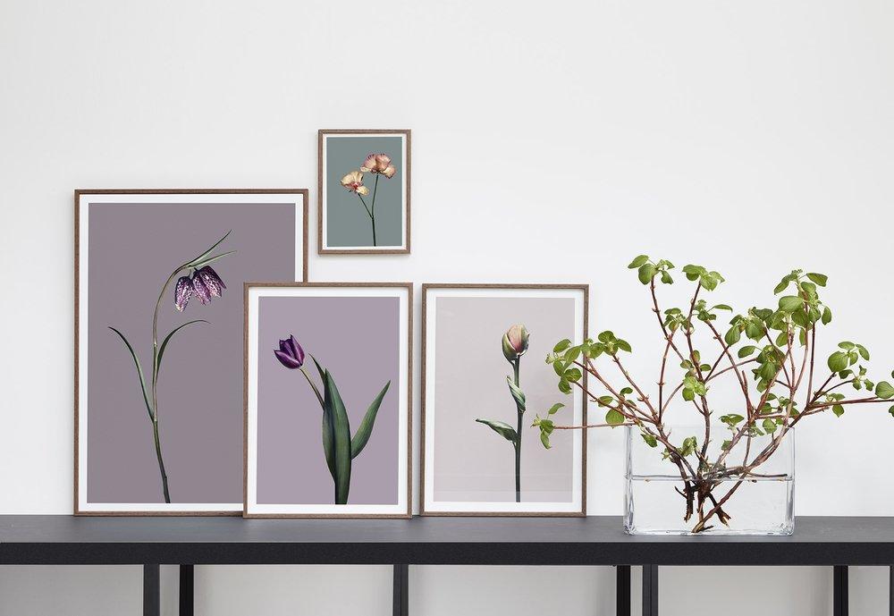 EG Fine Art Print, Blomsten som objekt,Limited Edition.Print på360 g Hahnemühle Museum Etching papir. Fås med eller uden eksklusiv Alpha ramme i lys Wengé ægte træfiner. Priser fra 1.150,-