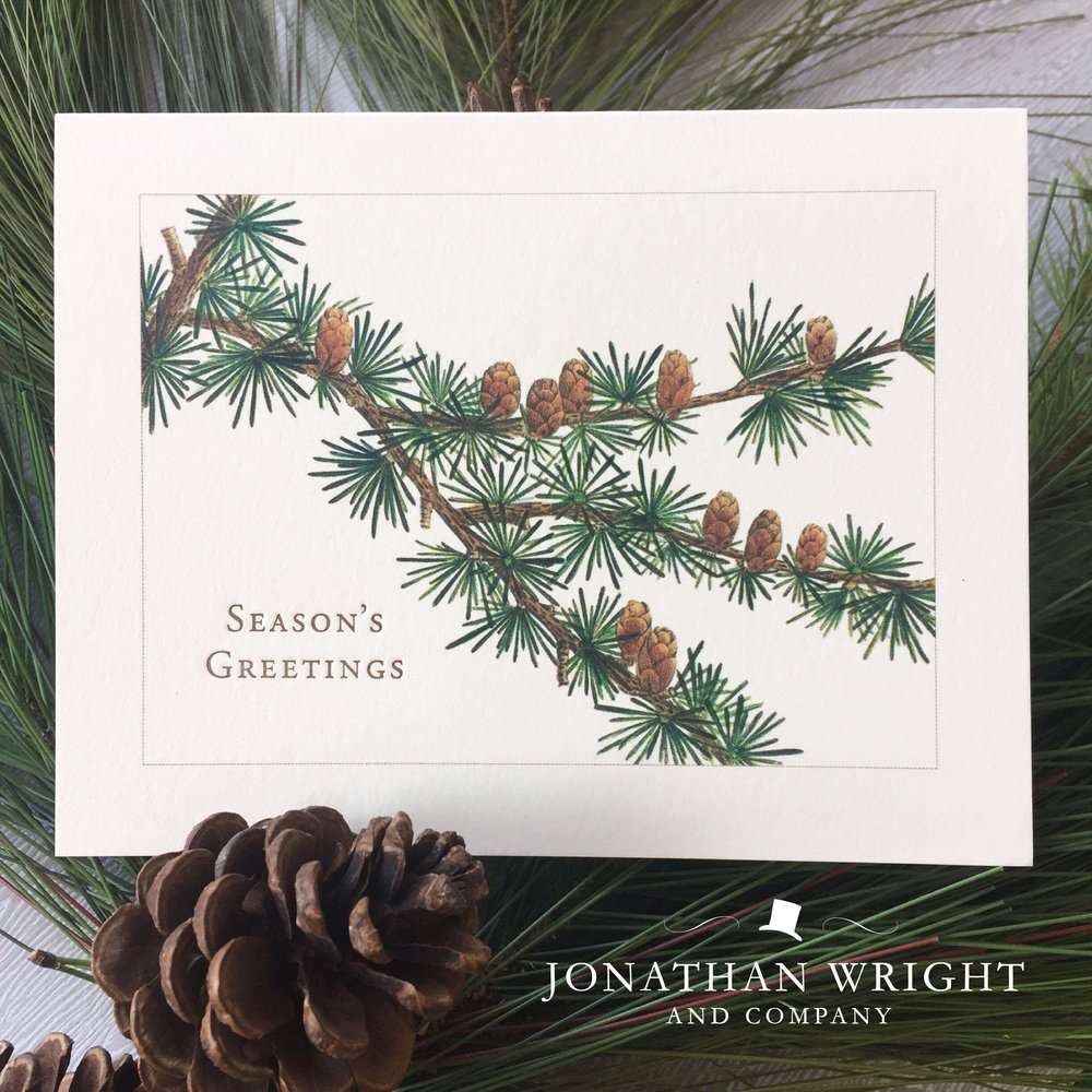 PINE BOUGH - SEASON'S GREETINGS.jpg