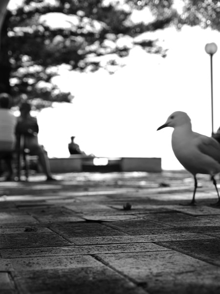 audun-mo-seagull