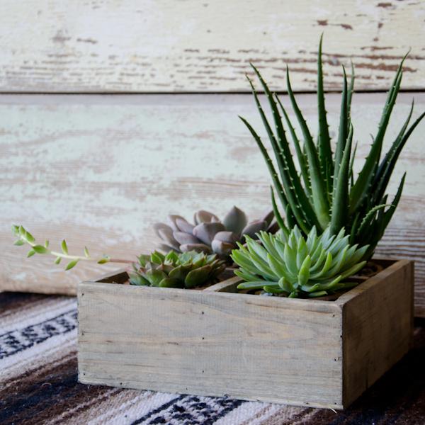 Saguaro Planter by Studio Choo, $60