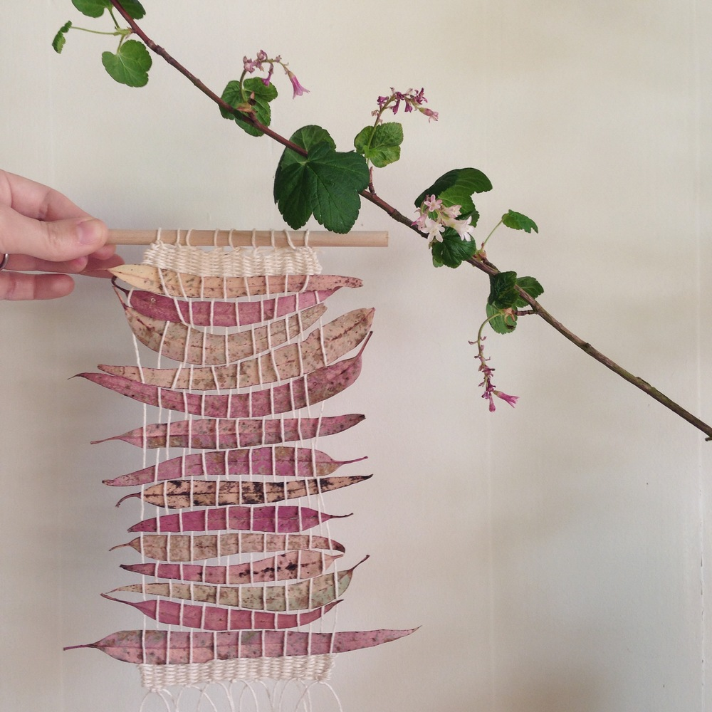 eucalyptus weaving