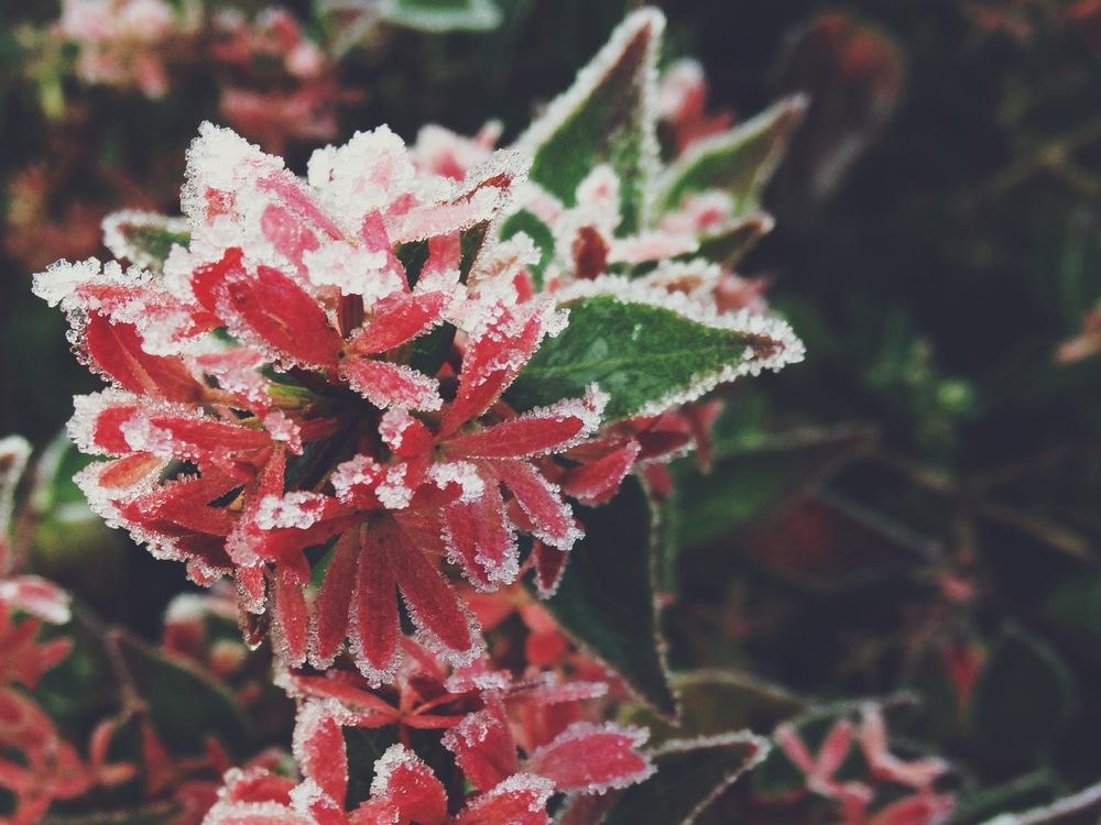 sosallydesign | frost