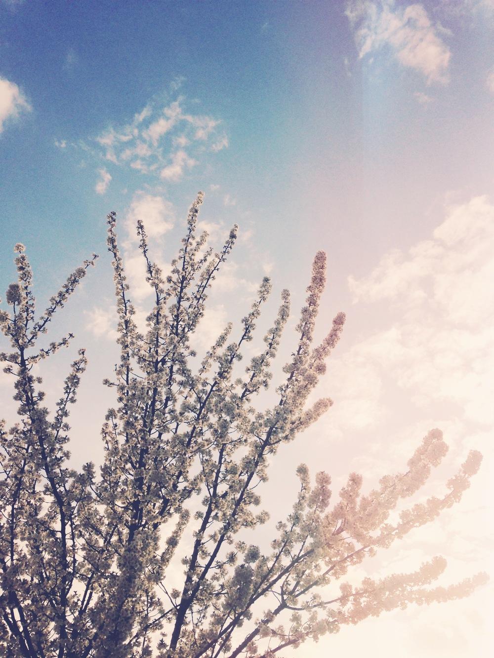 blossom | sosallydesign