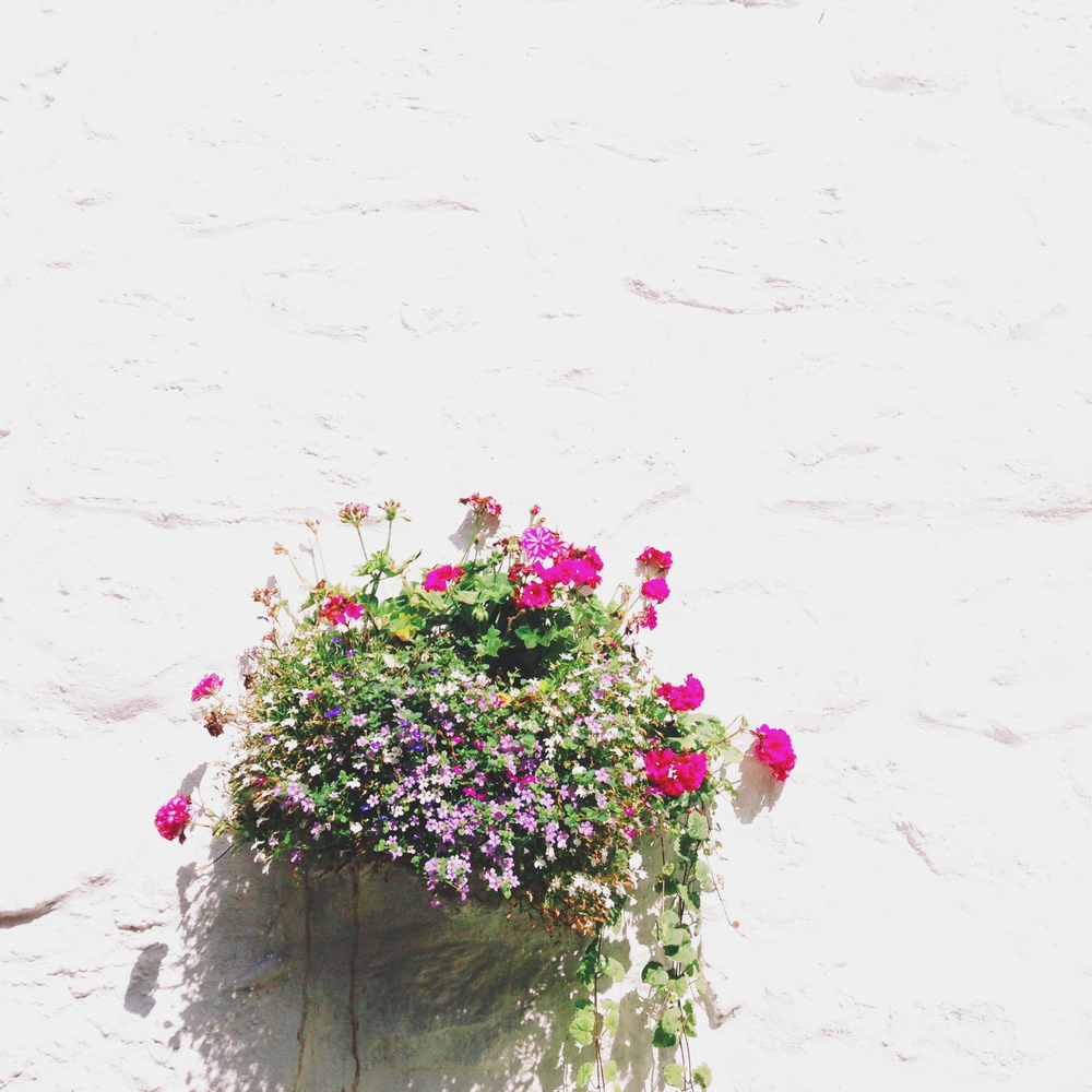 hanging basket, mousehole, cornwall | sally mussellwhite