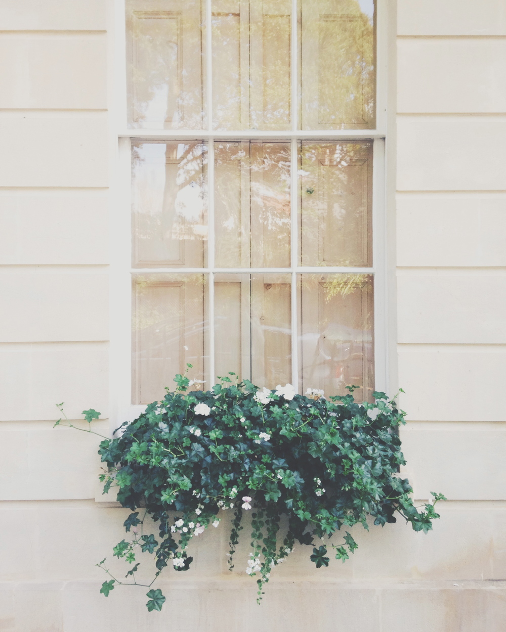 clifton windowsill | sally mussellwhite