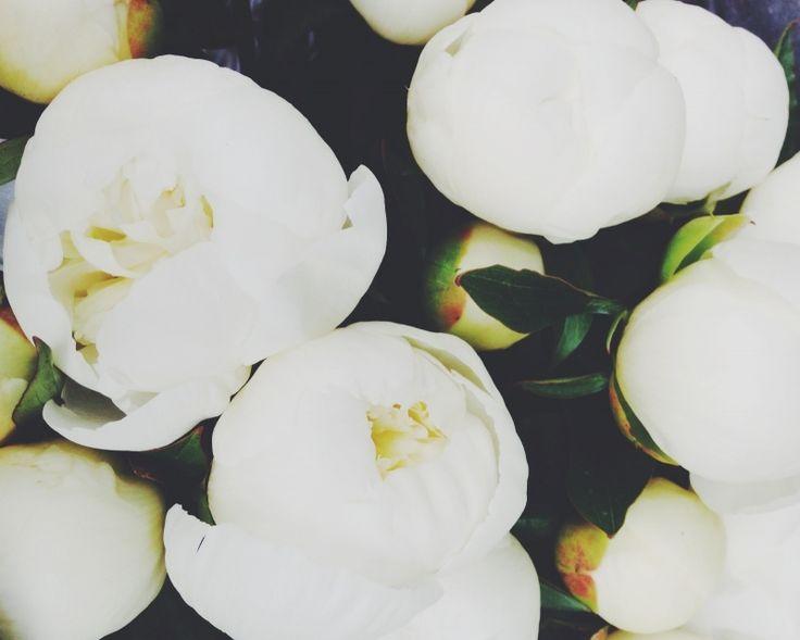 peonies | sally mussellwhite | vsco grid