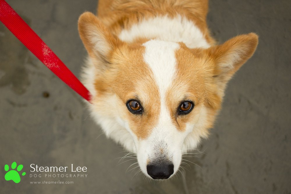 Corgi Beach Day - Vol. 1 9.jpg