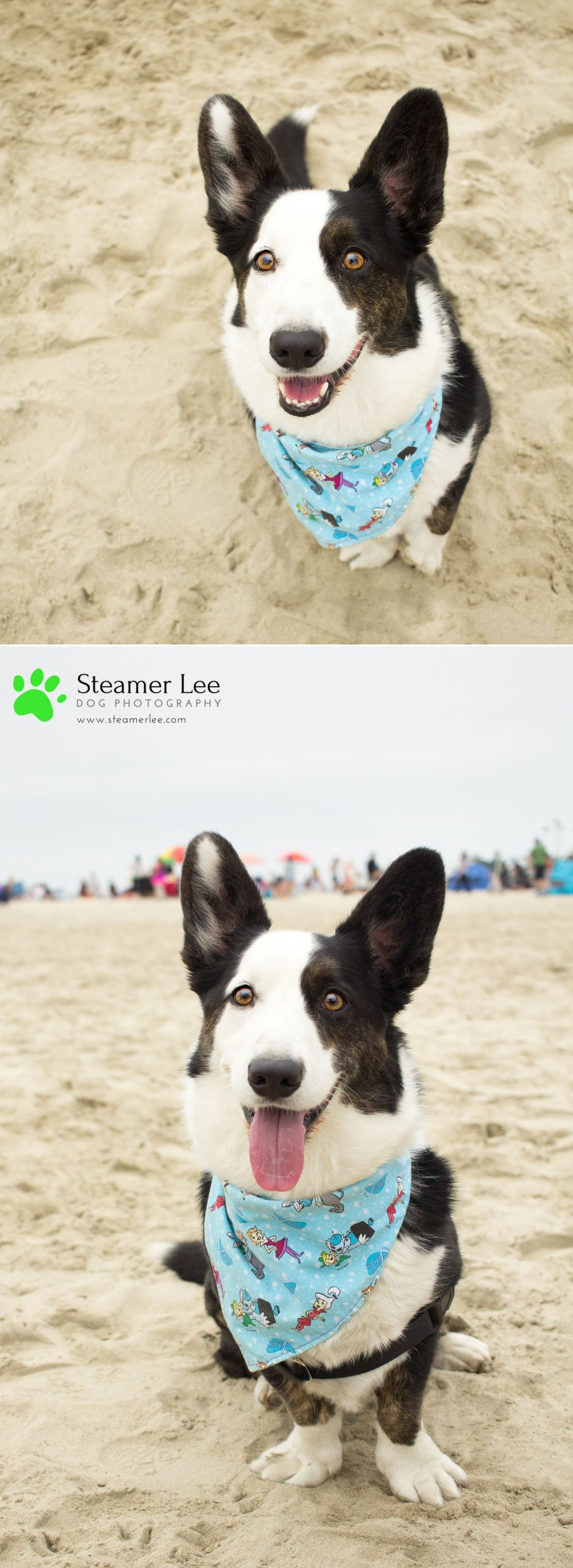 Steamer Lee Dog Photography - July 2017 So Cal Corgi Beach Day - Vol.2 - 1.jpg