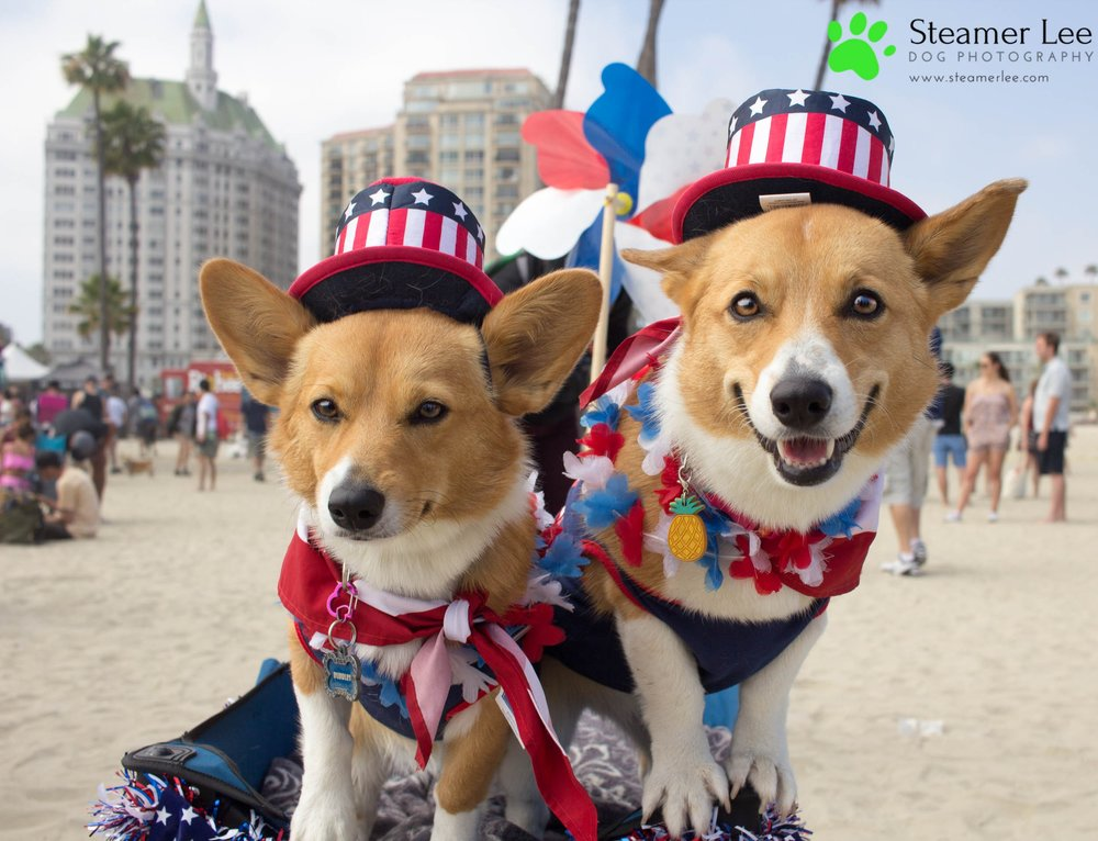 Corgi Beach Day Vol. 3 27.jpg