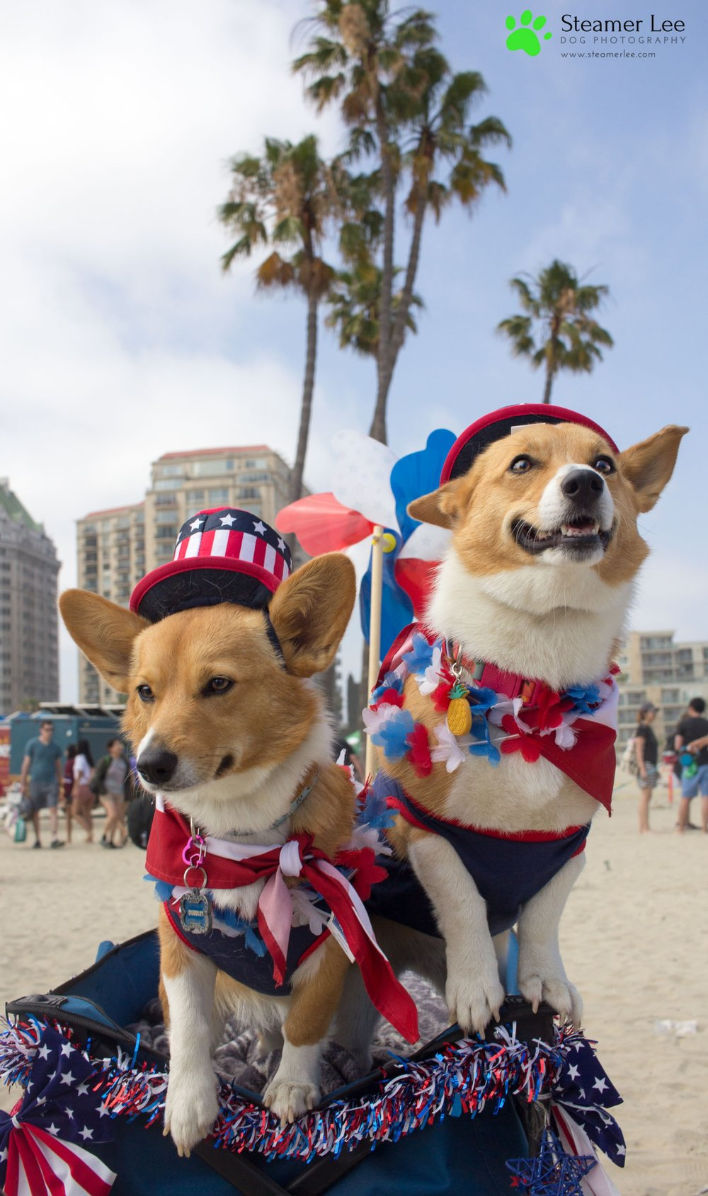 Corgi Beach Day Vol. 3 28.jpg