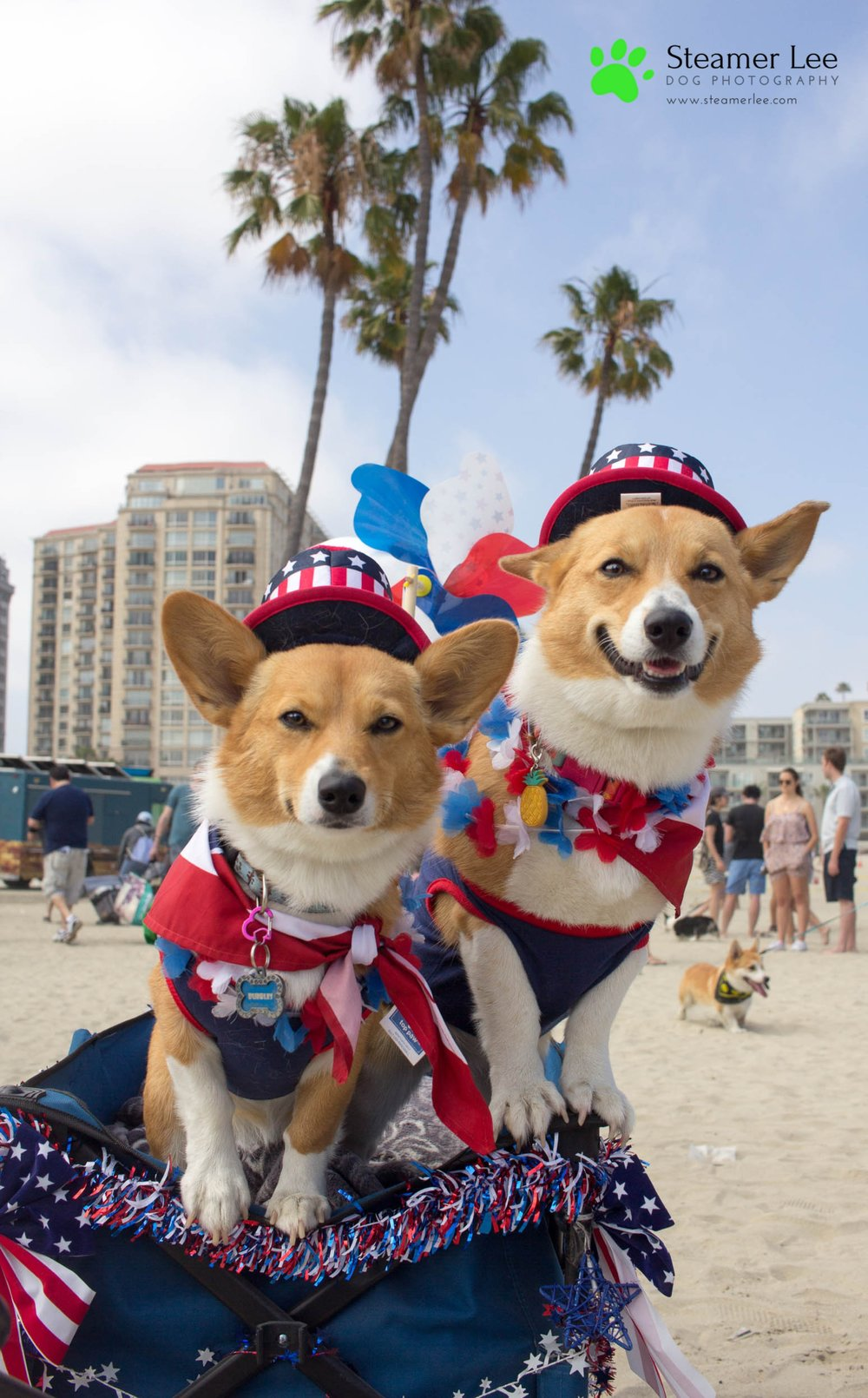 Corgi Beach Day Vol. 3 29.jpg