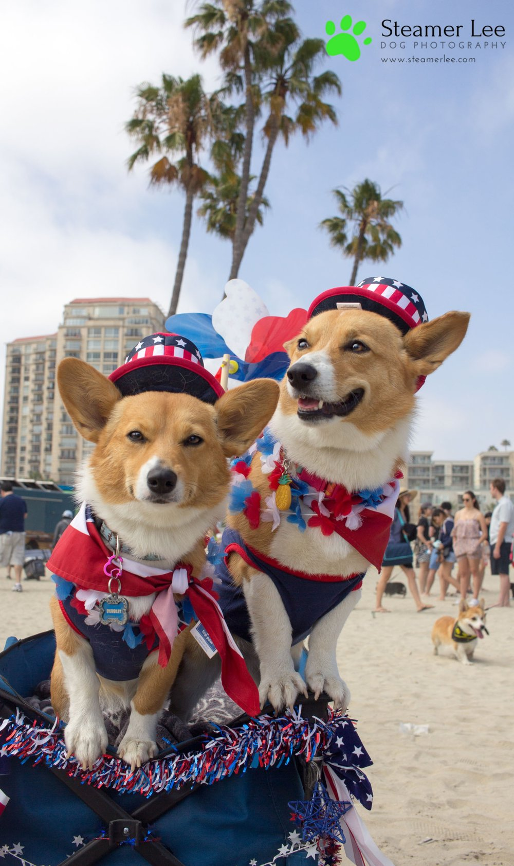 Corgi Beach Day Vol. 3 30.jpg