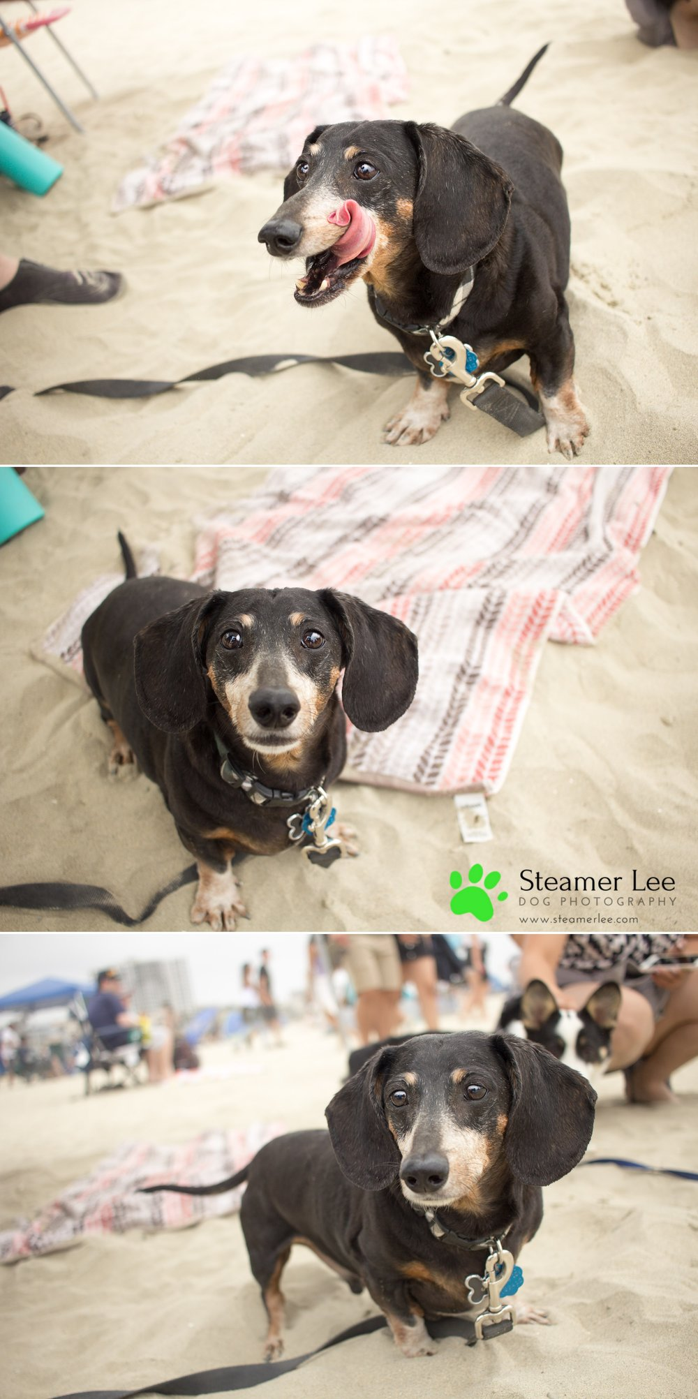 Steamer Lee Dog Photography - July 2017 So Cal Corgi Beach Day - Vol. 3 - 6.jpg