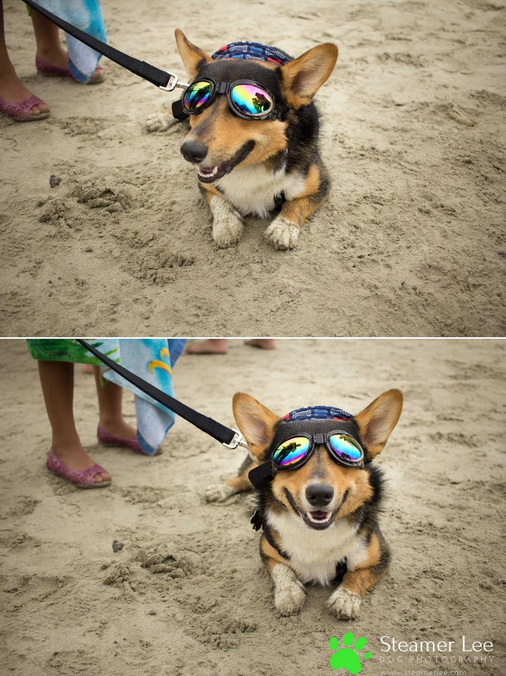 Steamer Lee Dog Photography - July 2017 So Cal Corgi Beach Day - Vol. 3 - 46.jpg