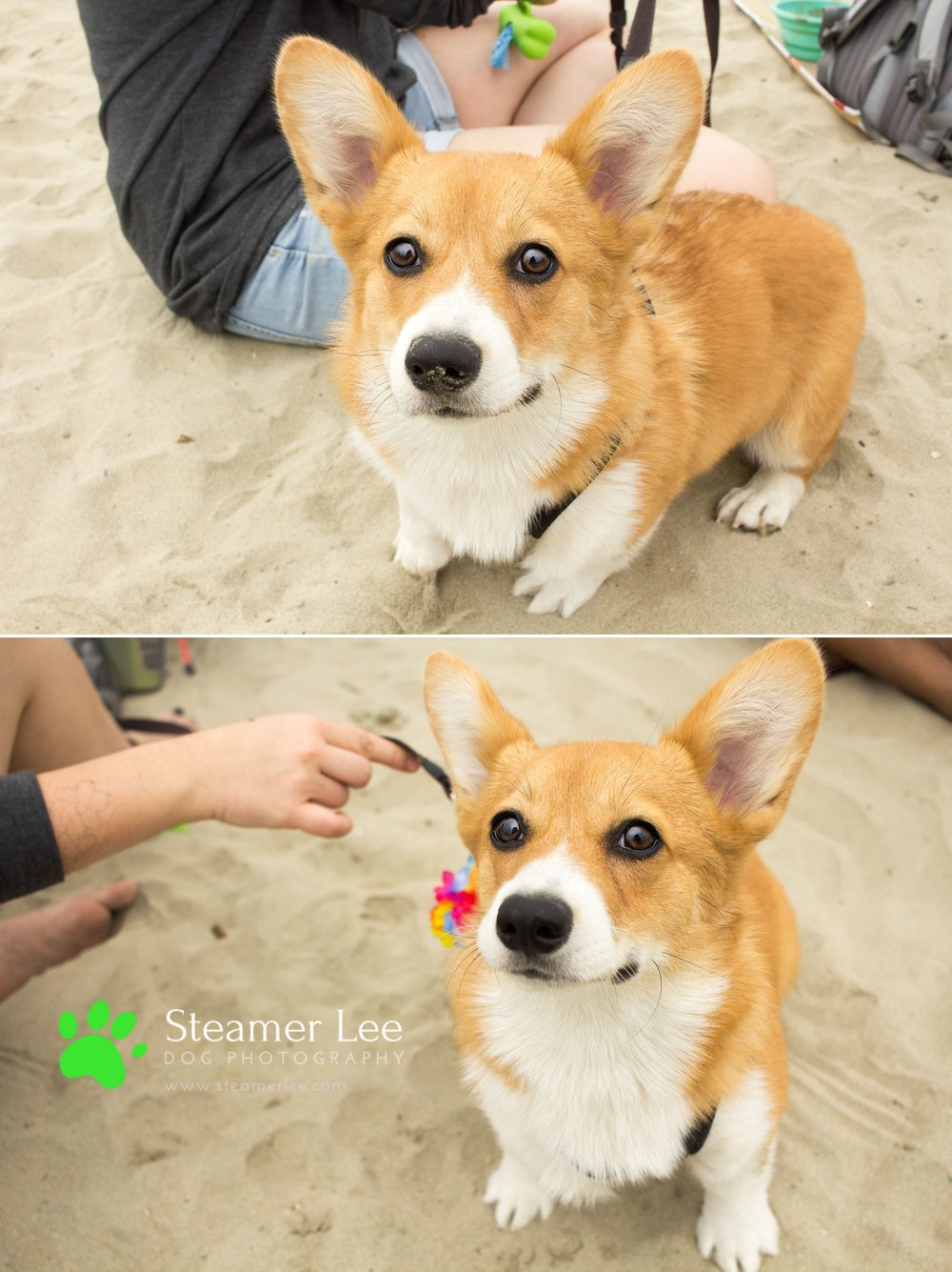 Corgi Beach Day - Vol. 1 3.jpg
