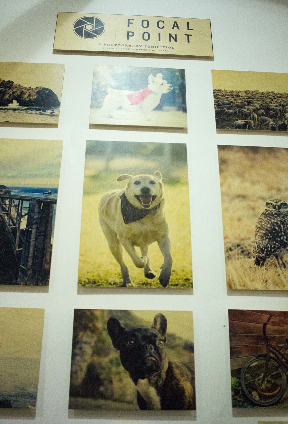 Steamer Lee Dog Photography - Focal Point Mission Viejo WoodSnap Exhibit - 4.jpg