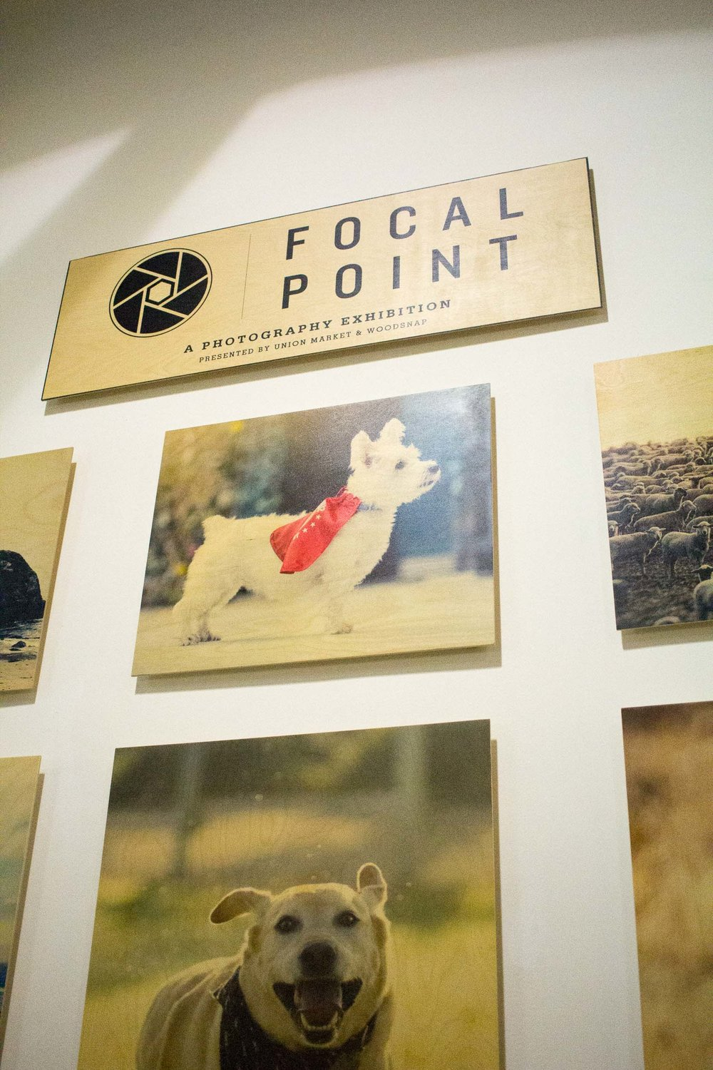 Steamer Lee Dog Photography - Focal Point Mission Viejo WoodSnap Exhibit - 10.jpg