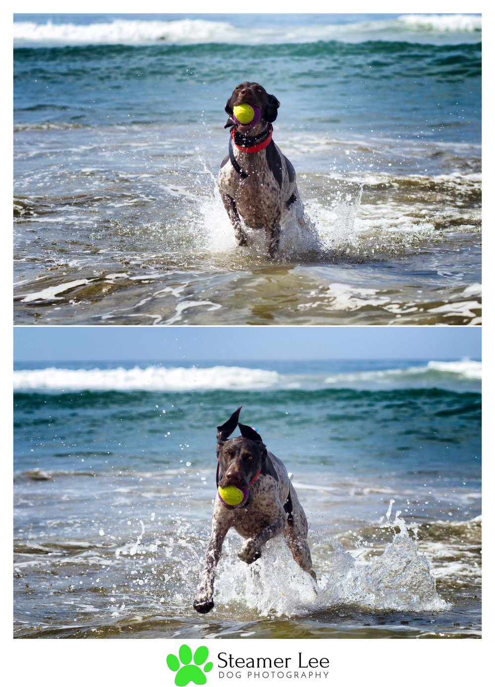 Steamer Lee Dog Photography - German Shorthaired Pointer Meetup - Huntington Beach Dog Beach - 00037.jpg