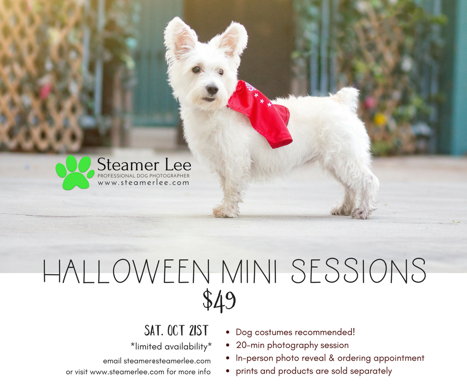 Halloween Mini Sessions.png
