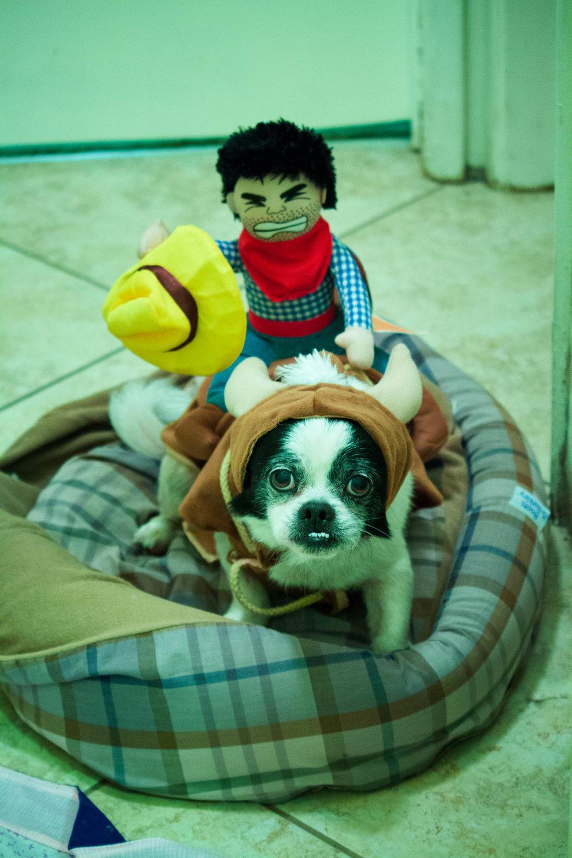 Steamer Lee Dog Photography -1-5.jpg