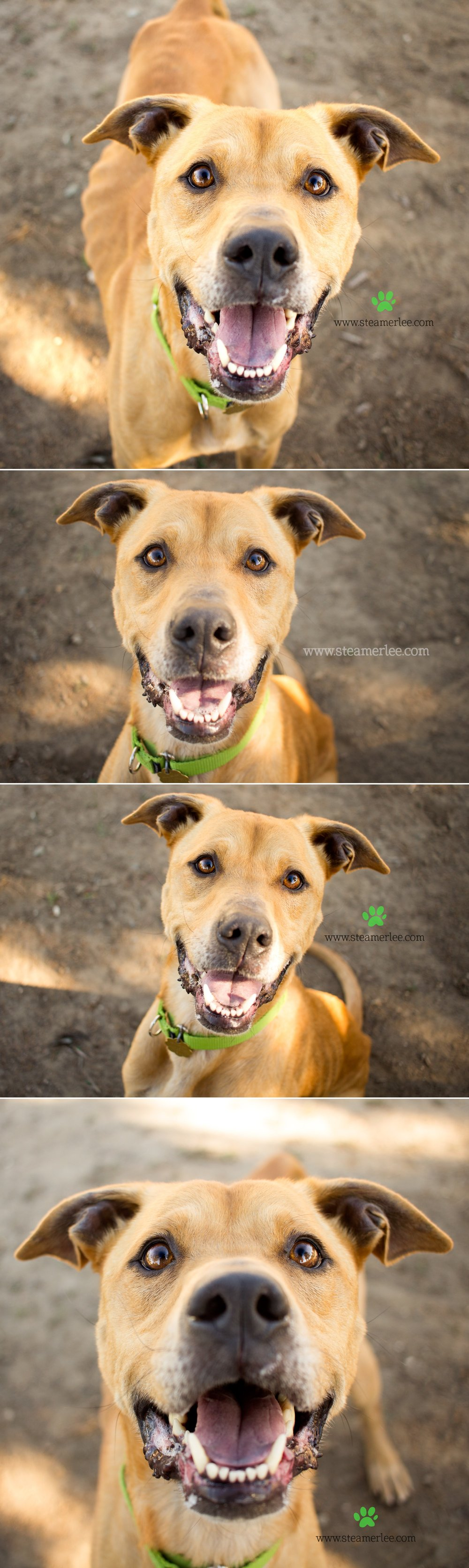 01 Steamer Lee Dog Photography - Seal Beach Animal Care Center.JPG