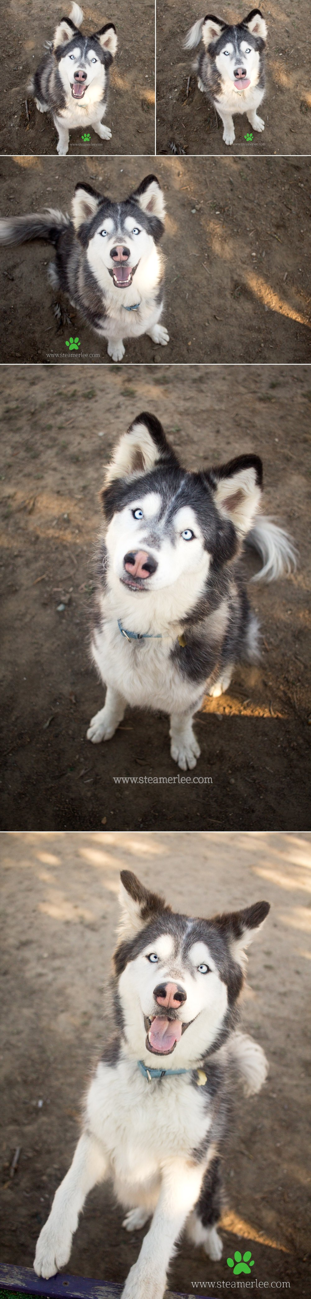 04 Steamer Lee Dog Photography - Seal Beach Animal Care Center.JPG