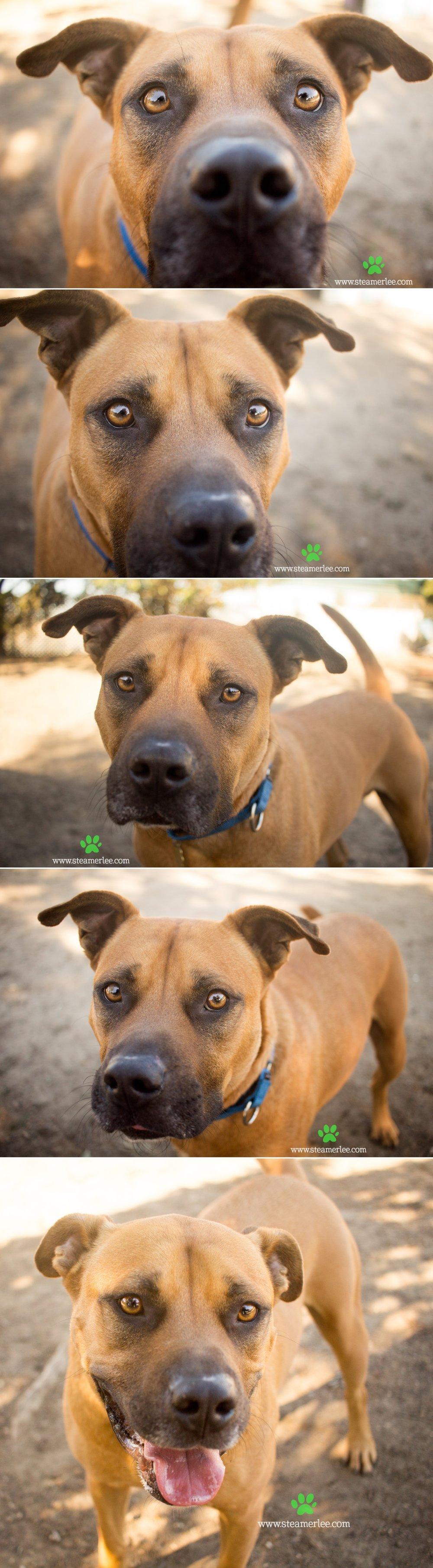 06 Steamer Lee Dog Photography - Seal Beach Animal Care Center.JPG
