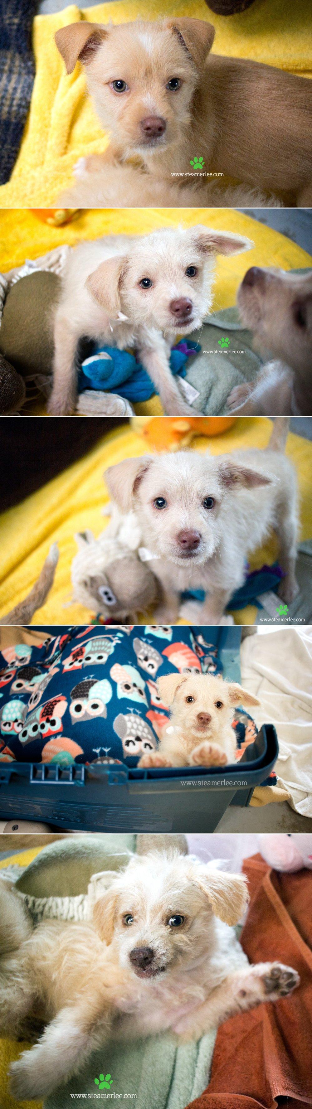 08 Steamer Lee Dog Photography - Seal Beach Animal Care Center.JPG