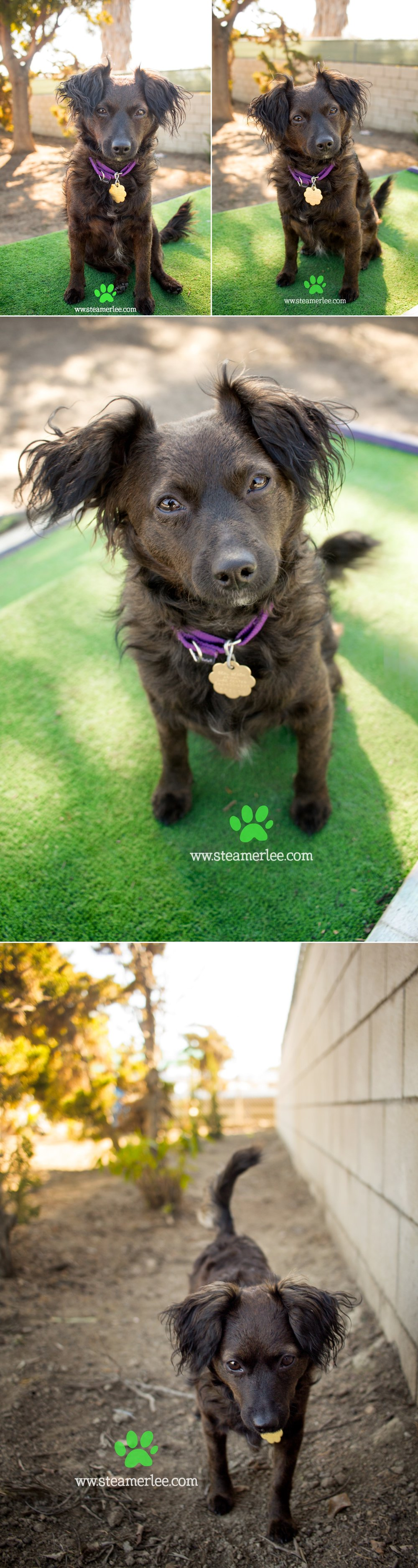 09 Steamer Lee Dog Photography - Seal Beach Animal Care Center.JPG