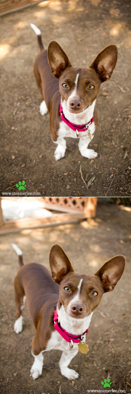 13 Steamer Lee Dog Photography - Seal Beach Animal Care Center.JPG