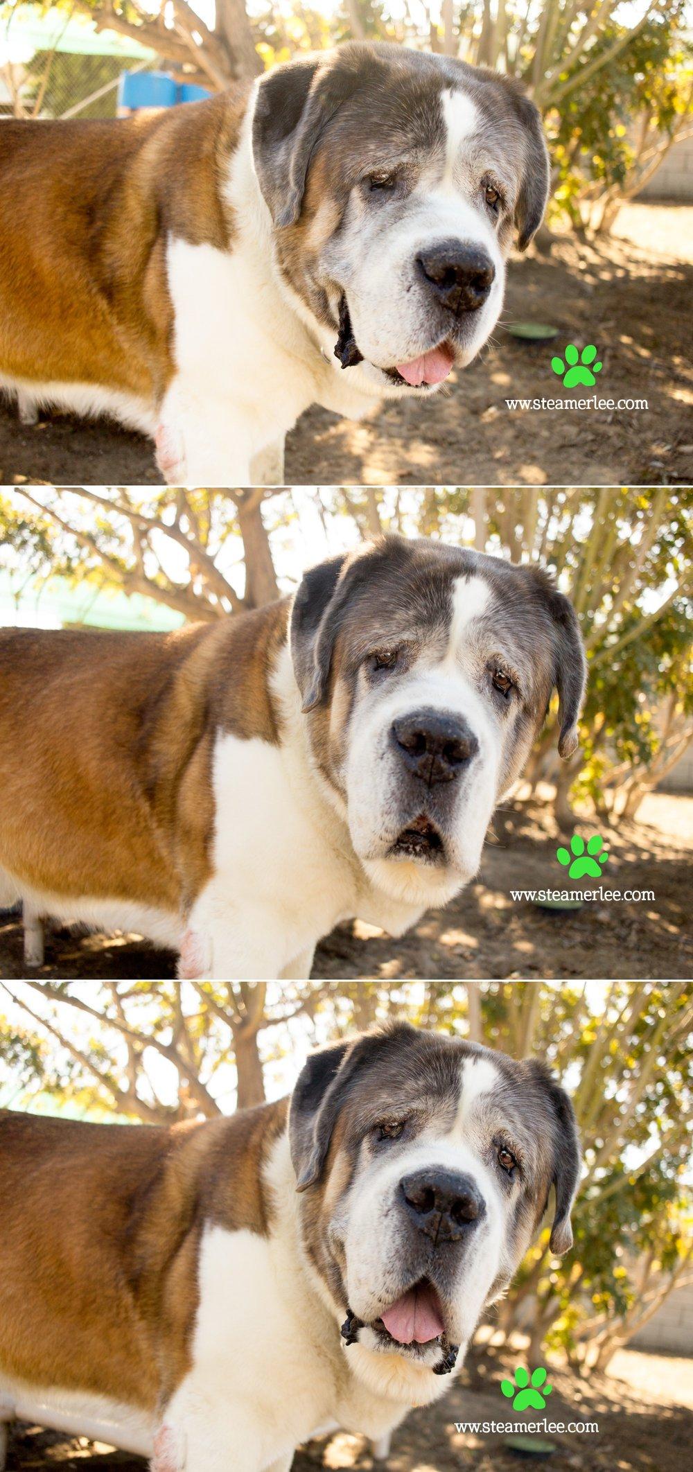 14 Steamer Lee Dog Photography - Seal Beach Animal Care Center.JPG