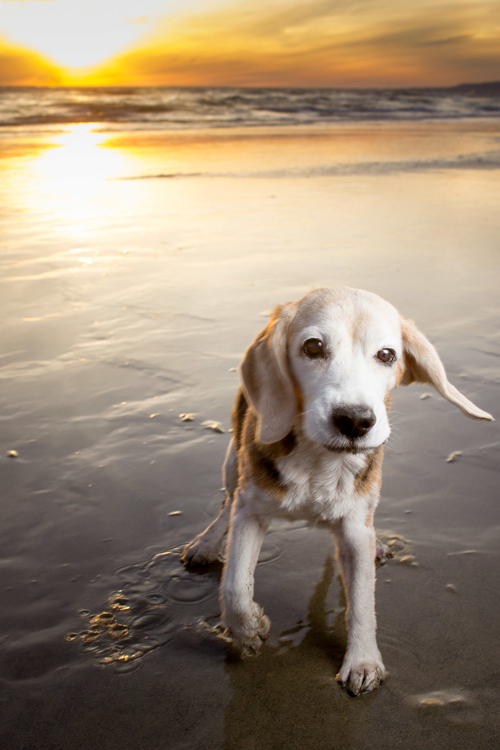 13-Orange-County-Dog-Photography-Pet-Huntington-Dog-Beach-Megan.JPG