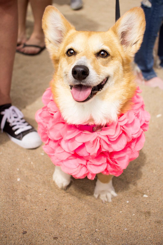 Orange-County-Dog-Photography-Pet-Huntington-Dog-Beach-SoCal-Corgi-Beach-Day_Steamer-Lee_010.JPG
