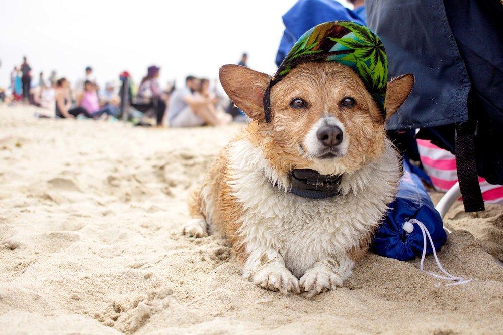 Orange-County-Dog-Photography-Pet-Huntington-Dog-Beach-SoCal-Corgi-Beach-Day_Steamer-Lee_017.JPG