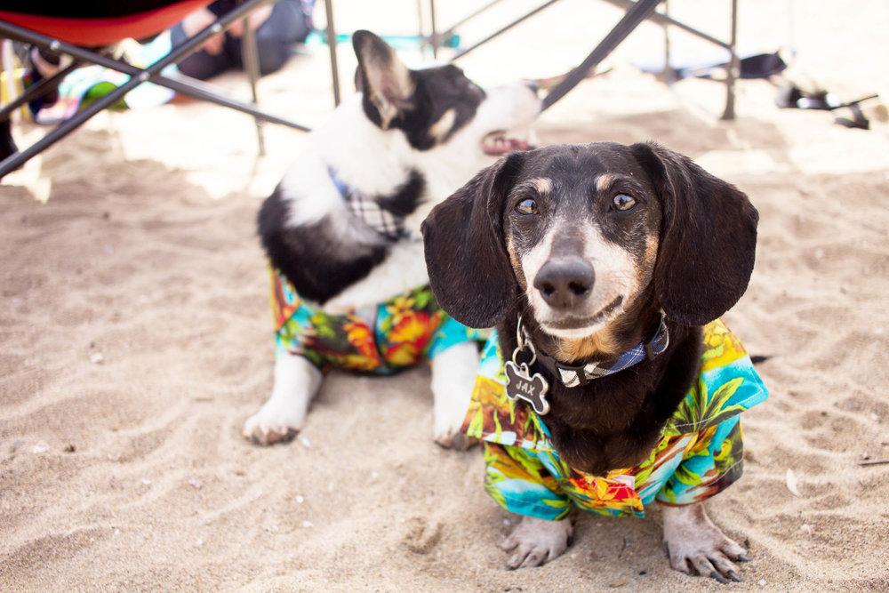 Orange-County-Dog-Photography-Pet-Huntington-Dog-Beach-SoCal-Corgi-Beach-Day_Steamer-Lee_018.JPG