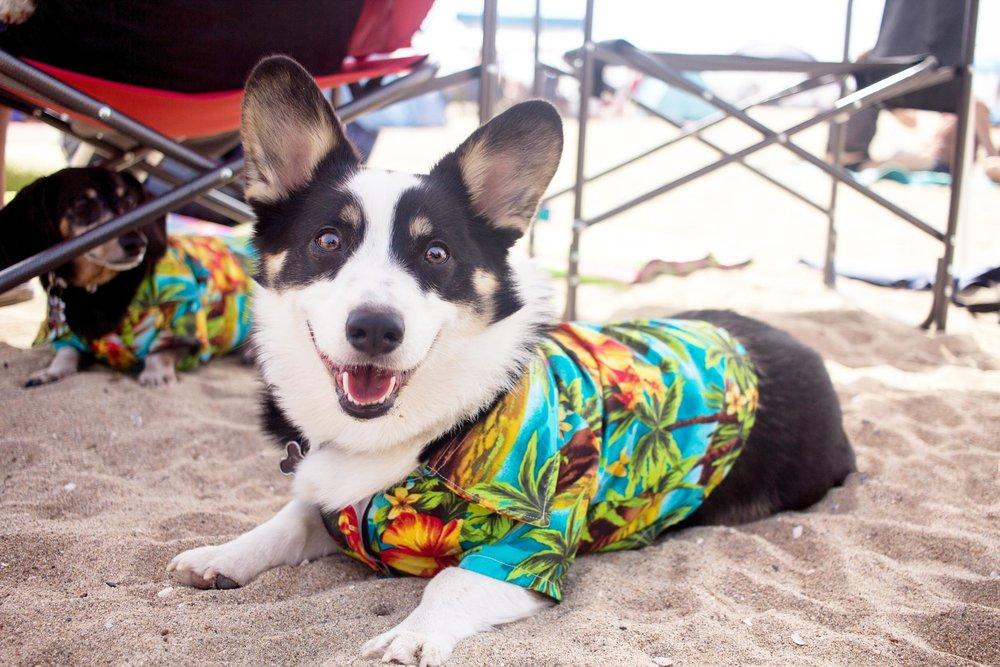 Orange-County-Dog-Photography-Pet-Huntington-Dog-Beach-SoCal-Corgi-Beach-Day_Steamer-Lee_020.JPG