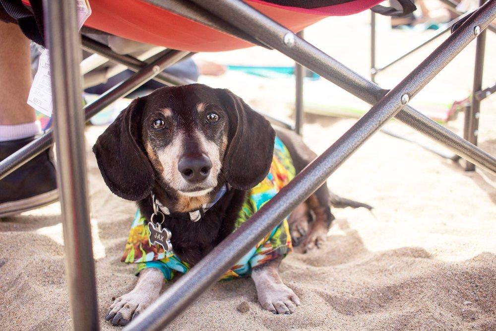 Orange-County-Dog-Photography-Pet-Huntington-Dog-Beach-SoCal-Corgi-Beach-Day_Steamer-Lee_021.JPG