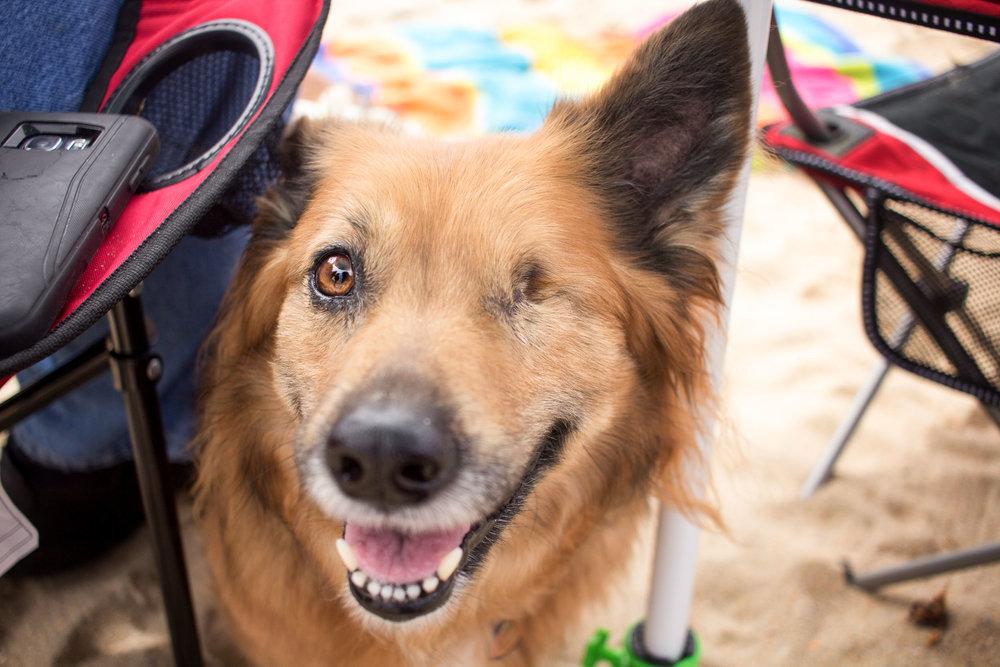 Orange-County-Dog-Photography-Pet-Huntington-Dog-Beach-SoCal-Corgi-Beach-Day_Steamer-Lee_026.JPG