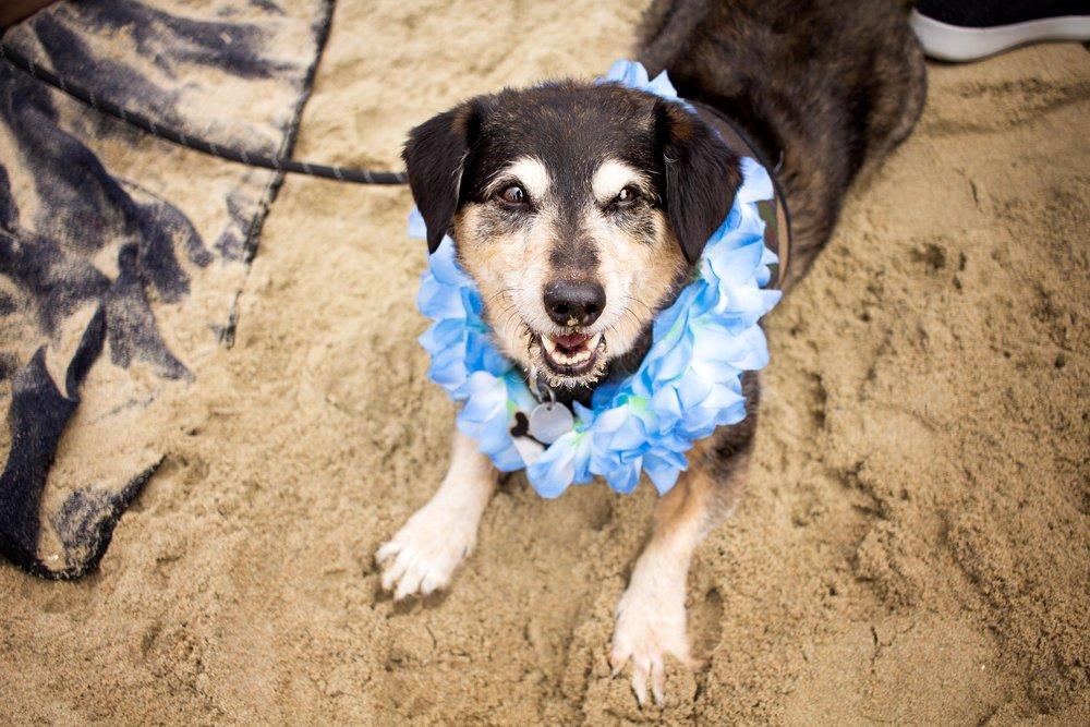 Orange-County-Dog-Photography-Pet-Huntington-Dog-Beach-SoCal-Corgi-Beach-Day_Steamer-Lee_029.JPG