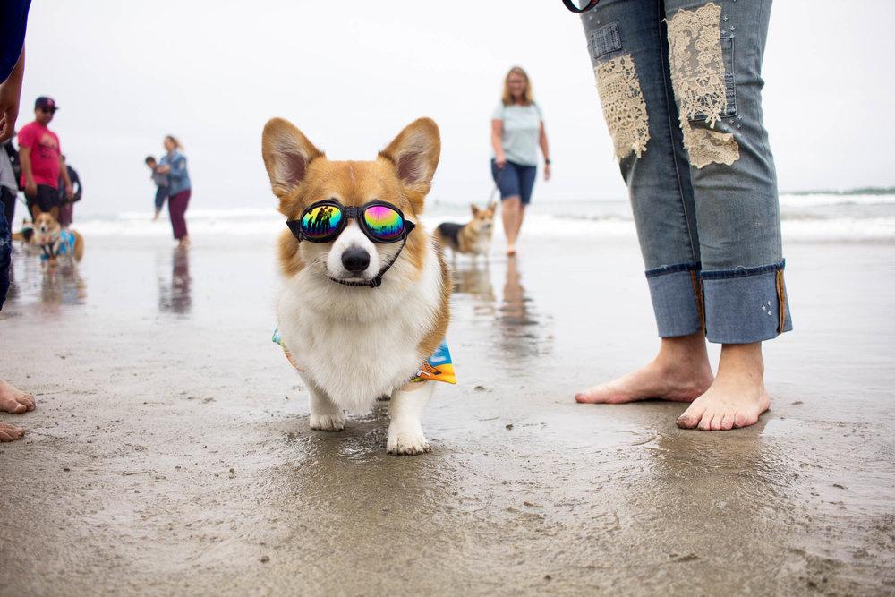 Orange-County-Dog-Photography-Pet-Huntington-Dog-Beach-SoCal-Corgi-Beach-Day_Steamer-Lee_048.JPG