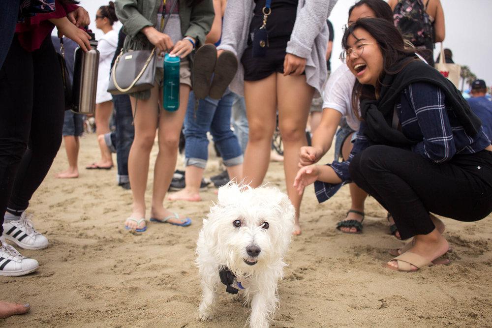 Orange-County-Dog-Photography-Pet-Huntington-Dog-Beach-SoCal-Corgi-Beach-Day_Steamer-Lee_073.JPG