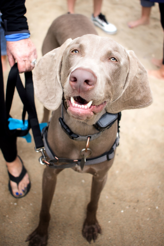 Orange-County-Dog-Photography-Pet-Huntington-Dog-Beach-SoCal-Corgi-Beach-Day_Steamer-Lee_076.JPG