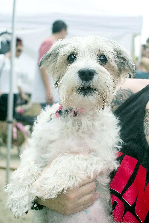 Orange-County-Dog-Photography-Pet-Huntington-Dog-Beach-SoCal-Corgi-Beach-Day_Steamer-Lee_081.jpg